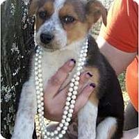 Adopt A Pet :: **STAR** - Wakefield, RI