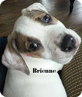 Pit Bull Terrier Mix Puppy for adoption in Davison, Michigan - Brienne