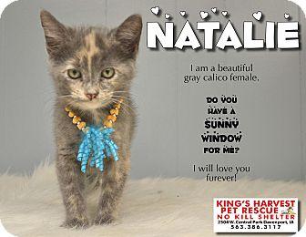 Calico Kitten for adoption in Davenport, Iowa - Natalie