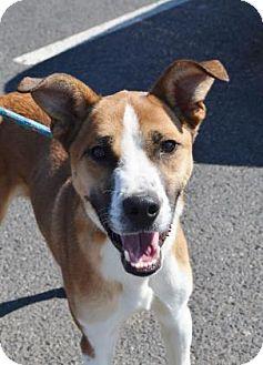 Terrier (Unknown Type, Medium)/Shepherd (Unknown Type) Mix Dog for adoption in Bellefontaine, Ohio - Aladdin