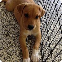Adopt A Pet :: Skylar - Washington, PA