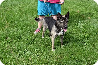 Husky/Shepherd (Unknown Type) Mix Dog for adoption in North Judson, Indiana - Frankie