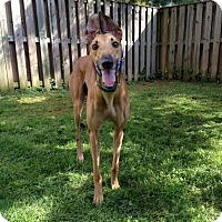 Adopt A Pet :: Mac - Spencerville, MD