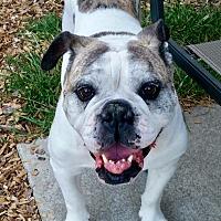 Adopt A Pet :: Rose - Concord, CA