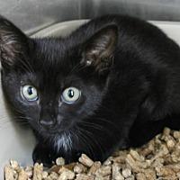 Adopt A Pet :: Logan - Hilton Head, SC