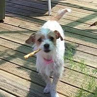 Adopt A Pet :: Tinkerbell - Livermore, CA