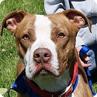 Adopt A Pet :: Morrey - Dundee, MI