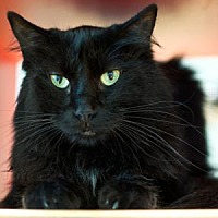 Adopt A Pet :: AJ - Alpharetta, GA