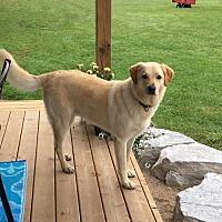 Adopt A Pet :: Dexter needs a new home - Lucknow, ON