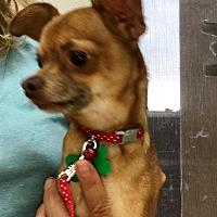 Adopt A Pet :: Rocket - Las Vegas, NV