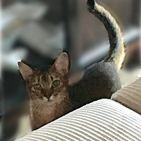 Adopt A Pet :: Jessica - Eureka, CA