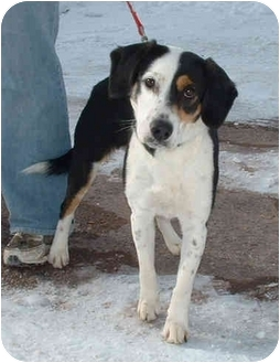 Beagle Mix Dog for adoption in Honesdale, Pennsylvania - Josie