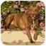 Photo 2 - American Pit Bull Terrier/American Staffordshire Terrier Mix Dog for adoption in El Segundo, California - Elsie