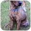 Photo 1 - Labrador Retriever Mix Dog for adoption in Peachtree City, Georgia - Amelia