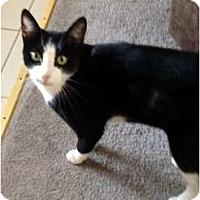 Adopt A Pet :: Isabella (Bella) - Morgan Hill, CA