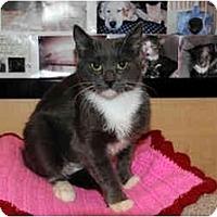 Adopt A Pet :: April - Farmingdale, NY