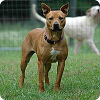 Adopt A Pet :: Cloe - Lawrenceville, GA