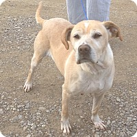 Adopt A Pet :: #483-14 @ Animal Shelter - Zanesville, OH
