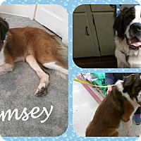 Adopt A Pet :: Ramsey - DOVER, OH
