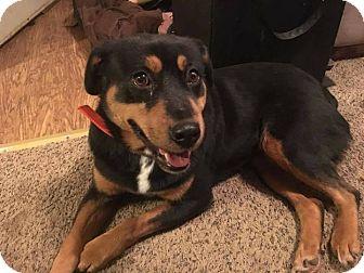 Rottweiler Mix Dog for adoption in Laingsburg, Michigan - Roxanne