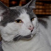 Adopt A Pet :: Andy (FCID# 03/20/2017 - 36 Trainer Clinic) - Greenville, DE