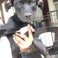 Adopt A Pet :: ALICE - St. Thomas, VI