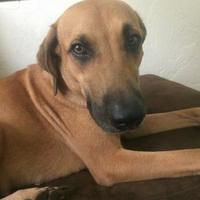 Adopt A Pet :: Camilla - Gainesville, FL