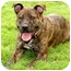 Photo 4 - American Pit Bull Terrier Mix Dog for adoption in Marina del Rey, California - Peanut