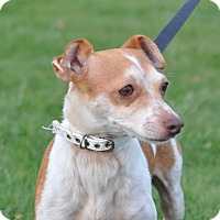 Adopt A Pet :: Nimby - Tumwater, WA
