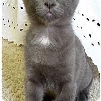 Adopt A Pet :: Bluestar - Edmond, OK