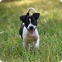 Adopt A Pet :: Burt - South Dennis, MA