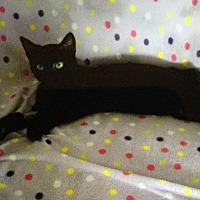 Adopt A Pet :: Isach - Burnham, PA