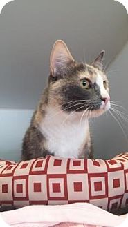 Domestic Shorthair Cat for adoption in Reisterstown, Maryland - MJ