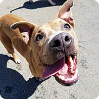 Adopt A Pet :: Mya - West Allis, WI