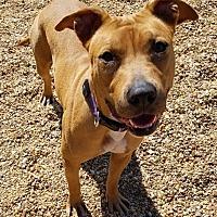 Adopt A Pet :: 1706-0219 Leap Frog - Virginia Beach, VA