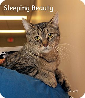 Domestic Shorthair Cat for adoption in Pleasantville, New Jersey - Sleeping Beauty