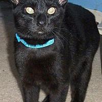 Adopt A Pet :: Jefferson - Colmar, PA