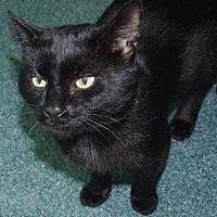 Adopt A Pet :: Louie Louie - Nashville, IN