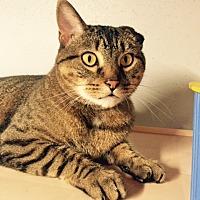 Adopt A Pet :: Samuel - Lenexa, KS