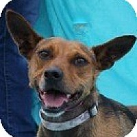 Adopt A Pet :: Callie - New Roads, LA