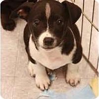 Adopt A Pet :: Tara - Arlington, TX