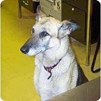 Adopt A Pet :: Ginger - BC Wide, BC