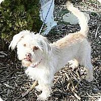 Adopt A Pet :: Paris - Ridgely, MD