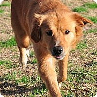 Adopt A Pet :: Lady B - New Canaan, CT
