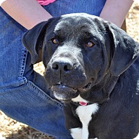 Adopt A Pet :: Jewel - Gadsden, AL