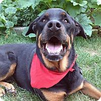 Adopt A Pet :: Moose - Caledon, ON
