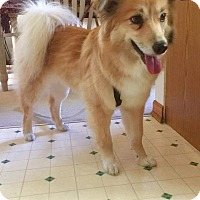 Adopt A Pet :: Morgan - Kia pending - Saskatoon, SK