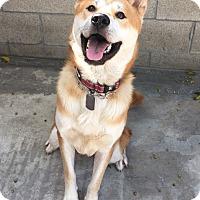 Adopt A Pet :: Dustin - La Mirada, CA