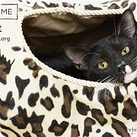Adopt A Pet :: Jett - Phoenix, AZ