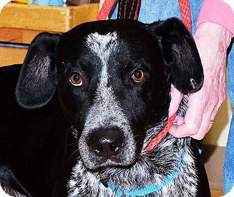 Australian Cattle Dog Mix Dog for adoption in Spokane, Washington - Romeo